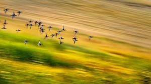 ncu secilen fotograf-Serkan Mutan